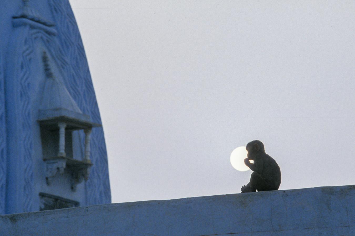 07_monkeySun2-Edit